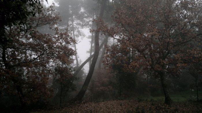 al limitar del bosco